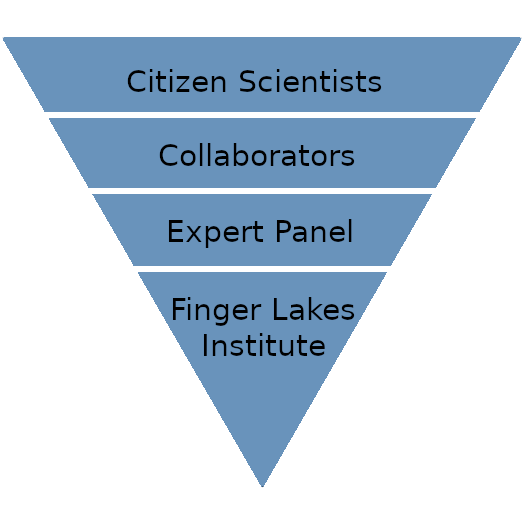 Four-celled inverted triangle illustrating the structure of the collaborative. Top and largest cell reads citizen scientists. Next cell reads collaborators. Next cell reads expert panel. Bottom and smallest cell reads Finger Lakes Institute.